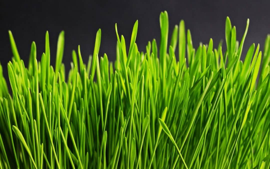 4 ways to save time and money when watering your lawn